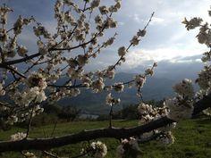 Spring time - primavera