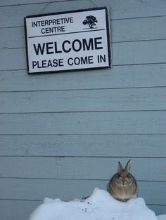 """""""Every bunny welcome"""" — at Police Point Park."""