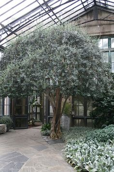 Olive tree, just got one for the front yard, I think they are stunning