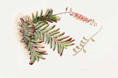 Botanical Art Worldwide Exhibition | SA Garden and Home