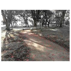 falling #red walk in the #park #chilling#relaxing#nature#philippines#公園#赤#フィリピン