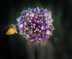 Flower's Life By Anna ...