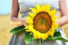 Barbara Maternity Photography • photo by Dalocska - United Photographers • #maternity #wheatfield #expectant #pregnant #motherhood #photography #sunflower