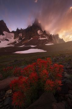 Red Carpet by Nagesh Mahadev on 500px