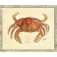 Sea Creatures Lg - Crab 03 Picture