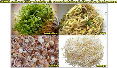 JEMNÁ SMĚS SEMEN NA KLÍČKY 20 GRAMŮ Cabbage, Vegetables, Food, Veggies, Vegetable Recipes, Meals, Cabbages, Yemek, Collard Greens