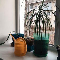 отсутствие напряжения-вот в чем счастье. #vsco #instavsco #vscomoscow #vscoflowers  #coffee #homedecor #nature #photooftheday