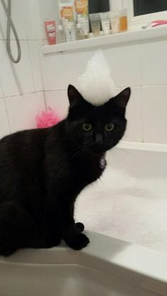 My funny little kitty with a bubble hat on his head. Sent in by Sarah-lee Partridge: