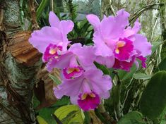 Colombian's Orchids