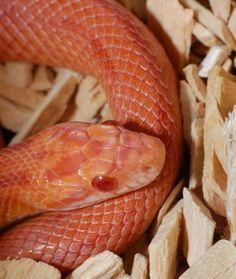 20 Best Reptile Snake Images On Pinterest Snakes
