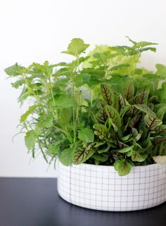 herbs in a pretty container