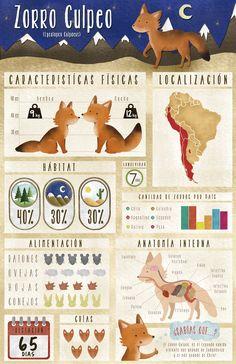 Infografía Zorro Culpeo,  By Vale Wilson -  www.behance.net/valewilson