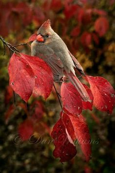 Perfect colours in photo to complement the female cardinal.