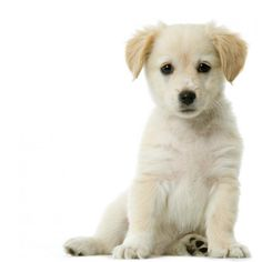 The Dog Trainer : Housetraining Your Puppy or Dog :: Quick and Dirty Tips ™