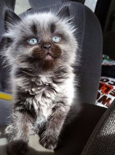 And this insanely adorable little werewolf kitten.   39 Photos For Anyone Who's Just Having A Bad Day