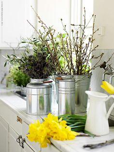 Påsken är en härlig tid för vårblommor och spirande natur. Vissa år ligger snön kvar och vi får skapa påskstämning inomhus så gott det går, men ibland sker allt över en natt. Små och knappt synliga musöron till blad blir till grönska på några timmar! Oavsett om du kan plocka ditt påskris i naturen eller får köpa det på torget så är de nya vaserna SOCKER och HÖSTÖ hink i zink vackra till påskens ris och liljor. Anna L-B, Livet Hemma redaktionen