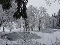 Snow, Winter, Outdoor, Woodland Forest, Animales, Winter Time, Outdoors, Outdoor Games, The Great Outdoors