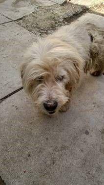 Pin Von Stacey Herrera Auf Adopt Hunde Aus Rumanien Tiere In Not Hunde