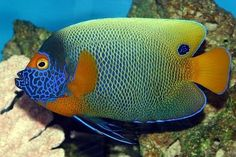 Güzel balık