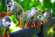 Plan your next trip to Colombia with our official tour guide. Rainforest Animals, Amazon Rainforest, Jungle Animals, Trip To Colombia, Colombia Travel, Colombia South America, South America Travel, Fauna Amazonica, Costa Rica Holiday