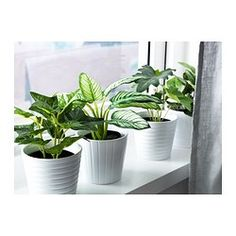1000 images about artificial indoor garden on pinterest for Ikea plante artificielle
