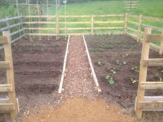 My Dig for Victory plot at Green End Farm - May 2015