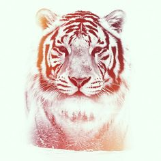 Double exposure white Tiger. Graphic design photoshop gfx
