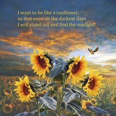 Giclee Print: Sunflower by Ata Alishahi : Sunflower Quotes, Sunflower Pictures, Sunflower Art, Sunflower Fields, Sunflower Sketches, Sunflower Garden, Sunflower Design, Bright Summer Acrylic Nails, Sunflower Wallpaper