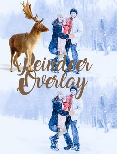 Reindeer Overlays Deer overlay Transparent PNG for Christmas Photoshop Clipart Mini Photo Session In Photoshop Overlays, Photoshop Elements, Photoshop Tutorial, Mini Photo, Photo Manipulation, Photo Sessions, Reindeer, Moose Art, Digital Art