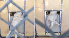 Dog gets stuck in kennel at California shelter, staff ignores dog's cries! Act Now! | YouSignAnimals.org