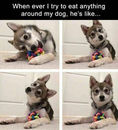 These animal photos are funny and relatable. They are cute, so be ready to smile!