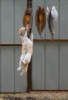 Drying fish. Cat. Dinner. Stinker