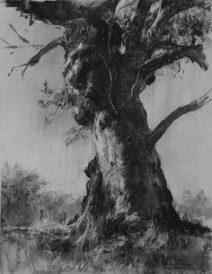 I love this tree drawing. an Australian Icon (charcoal) by John McCartin Charcoal ~ x Landscape Drawings, Landscape Art, Landscape Paintings, Tree Drawings Pencil, Art Drawings, Pencil Art, Academic Drawing, Australian Icons, Gravure Illustration