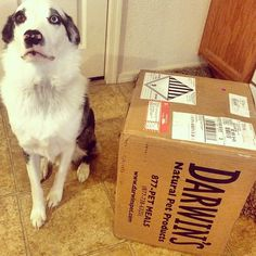 Loving the Darwin's Raw Dog Food! https://www.darwinspet.com
