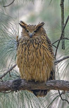 Brilliant Owls Beautiful Photos Collection We gathered for at Magazine , this collection of Beautiful Photos and charmant Owls , enjoy i Owl Photos, Owl Pictures, Nature Animals, Animals And Pets, Cute Animals, Beautiful Owl, Animals Beautiful, Owl Species, Owl Bird
