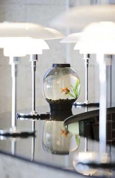 Out-of-the-ordinary hotel amenities -- Goldfish at Hotel Monaco Chicago
