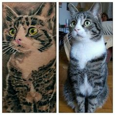 A little bewildered cat whose bright eyes were captured perfectly: | 14 Awesomely Beautiful Pet Tribute Tattoos