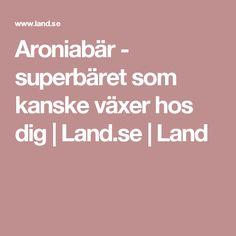 Aroniabär - superbäret som kanske växer hos dig   Land.se   Land