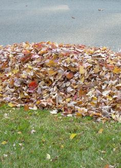 Composting Leaves – 4 Simple Tips To Making Great Compost With Leaves.  see info about types of leaves.