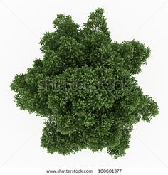 trees top view - Google Search