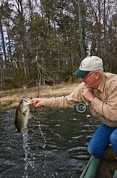 Bass fishing is a lovely way to relax. There are always a number of tournaments in the United States, which is the house of the bass among other parts of the world.