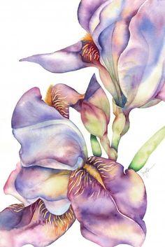 Sherri Snyder - Blooming Iris