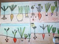 root begetable garden - - Yahoo Image Search Results