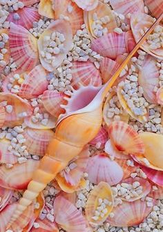 Vibrant summer seashells at the beach