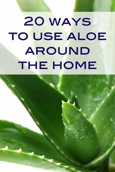 20 smart ways to use aloe around your home, besides for sunburns. You'll want to save this list!
