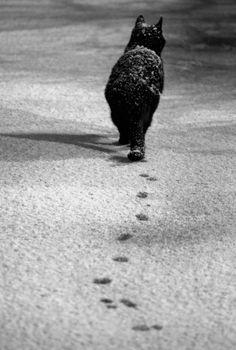 mostlythemarsh:Black Cat