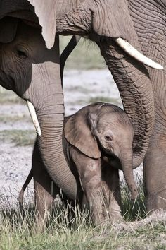Baby elephant getting caresses