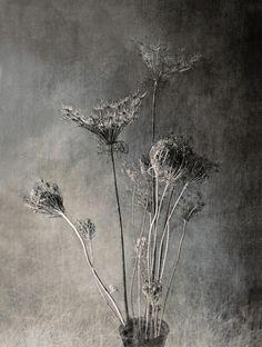 by Joan Kocak