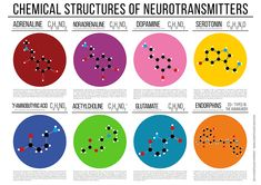 """""""Chemical Structures of Neurotransmitters"""" Posters by Compound Interest 