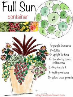 all my friends are flowers: full sun container planting plan, annuals